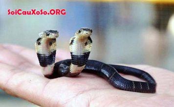 Mơ thấy 2 con rắn đánh con gì