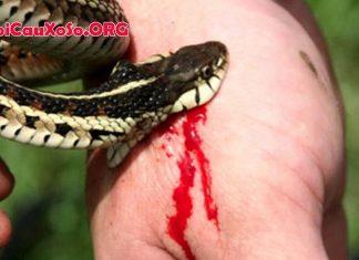 Mơ thấy rắn cắn vào ngón tay đánh số mấy